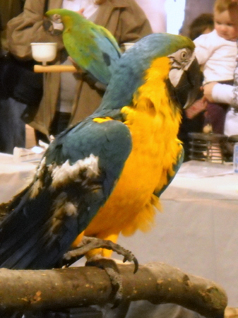 extreme cute bird macaw adorable